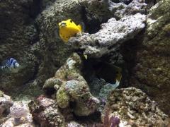 «Биарриц и океан. Открой тайны подводного мира, узнай легенды прошлого».Экскурсия для маленьких путешественников и их родителей